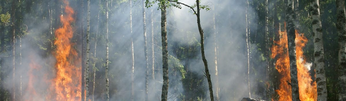 SPD Antrag: Ansätze zum Umgang mit Waldbränden